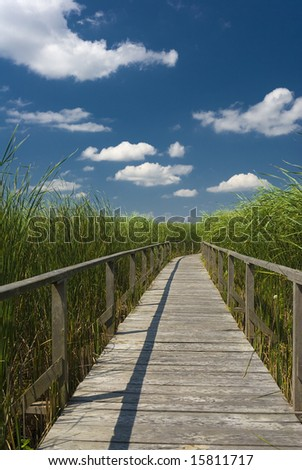wooden footpath in the reed