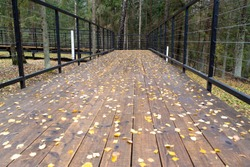wooden forest bridge on which the leaves lie from the trees in autumn. Beautiful autumn nature in the forest, copy space for text