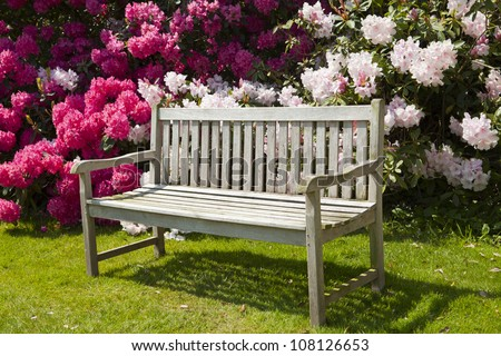 Wooden garden bench with rhododendrons.