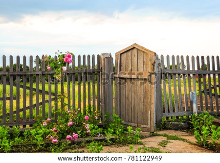 Wooden gate. Roses on the fence. Summer field.