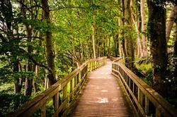 Wooden hiking bridge through a forest in Mons Klint, Denmark.