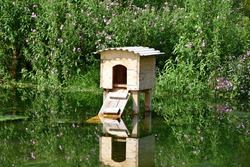 Wooden house on the pond for wild ducks