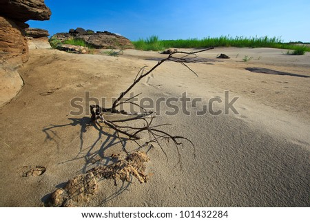 wooden in desert and blue sky in Ubonratchatanee