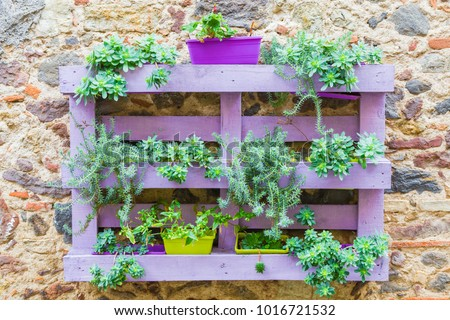 Wooden pallet attached to an old wall used as a flower vase.