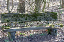 Wooden park bench covered with bright green moss surrounded by dry, brown leaves in woodland park