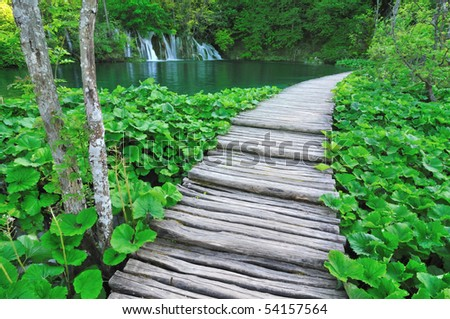 Wooden path along a lake lined with green plants and trees
