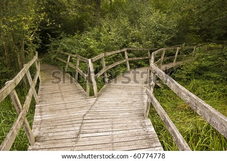 Wooden path in forest splitting into two directions