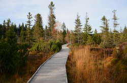 Wooden path in nature. Old grey wood. Wooden walkway in peat bog. Hiking path in Ore mountains, Bozi Dar, Czech Republic.