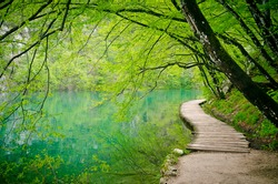 Wooden path  in Plitvice National Park, Croatia. Wooden footbridge across stream in the mountain forest, Croatia.