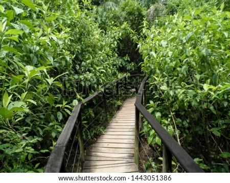 Wooden path in shrub path #1443051386