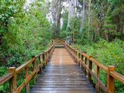 wooden path in the myrtle forest