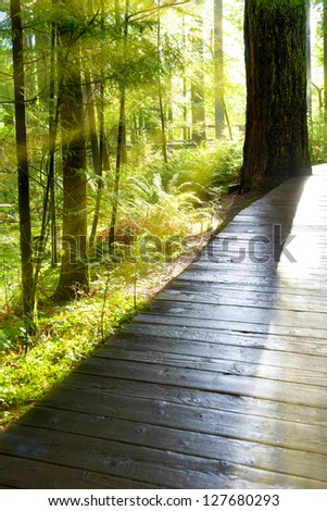 Wooden path through green forest at sunrise with fog and warm light
