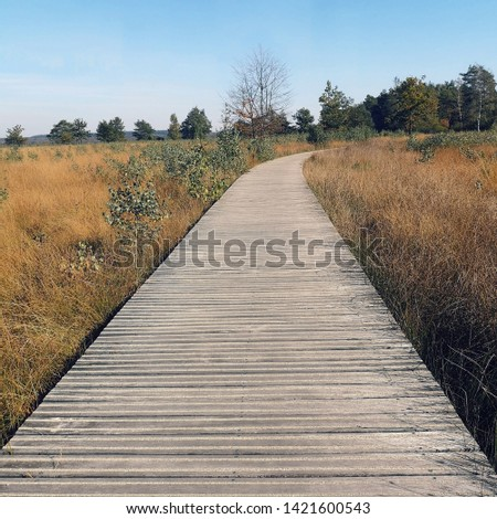 wooden path trail national park Hoge Veluwe Netherlands  #1421600543
