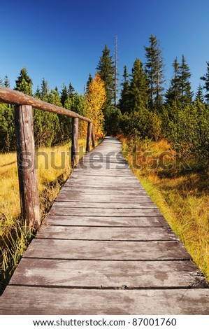 Wooden path walkway through wetlands and forest, Czech republic