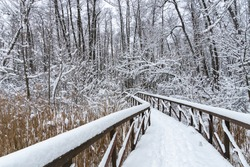 Wooden Path Walkway under snow through frozen forest after snowfall. Winter landscape