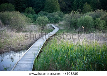 Wooden pathway in a swamp area at night - stock photo