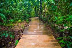Wooden pathway in deep green mangrove forest nature landscape scene