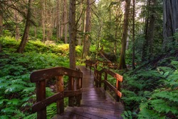 Wooden Pathway in the Rain Forest during a vibrant sunny day. Taken on Giant Cedars Boardwalk Trail in Mt Revelstoke National Park, British Columbia, Canada.