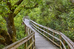Wooden pathway into the forest. Mao river. Ribeira sacra. Spain
