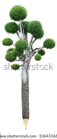 Wooden pencil with leaves isolated white