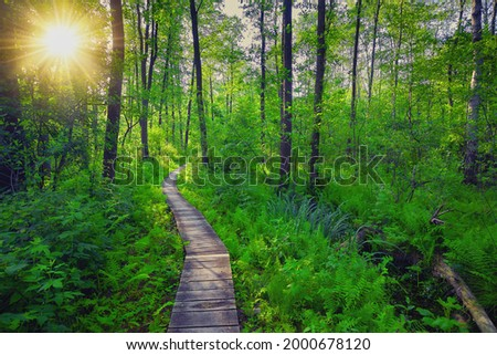 wooden pier - a forest path among the marshes in the Poleski National Park Zdjęcia stock ©