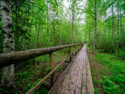 wooden plank footpath in forest for hiking in wild nature. summer scene