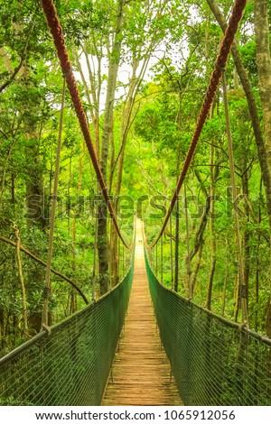 Wooden rope bridge or suspension bridge in rainforest through the treetop. Garden Route, Plettenberg Bay, South Africa. #1065912056