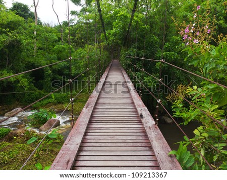 Wooden rope walkway through in a rain forest