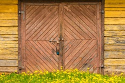 Wooden rural building facade with old cracked paint, door and dandelion flowers in the front
