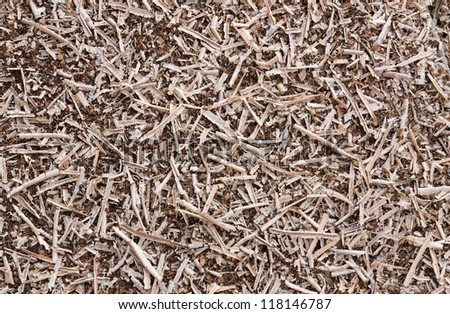 Wooden sawdust and  Wood chips  texture shavings background