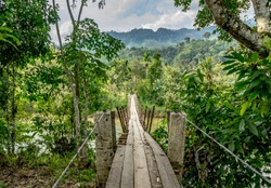 Wooden scary hanging bridge in amazing jungle near Bukit Barisan mountain range Leuser ecosystem in Banda Aceh, Sumatra, Indonesia
