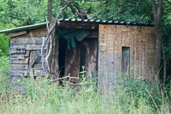 WOODEN SHACK PARTIALLY OBSCURED BY OVERGROWN VEGETATION