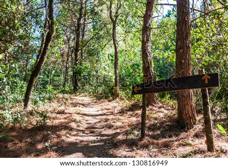 Wooden sign board on the natural trail. - stock photo