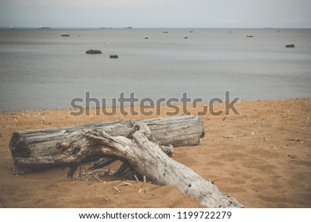 Wooden snag on the sand of the beach. Retro vintage style - Shutterstock ID 1199722279