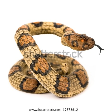 Wooden snake isolated on a white background