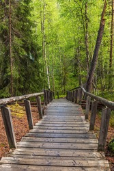 wooden staircase in the forest