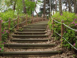 Wooden stairs in the woods of korea