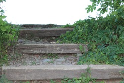 Wooden steps engulfed by green leaves