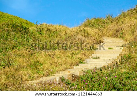 Wooden steps on hillside trail to Rodeo Beach, with spring wildflowers here and there, in the Golden Gate National Recreation Area in northern California, for recreational and coastal motifs #1121444663