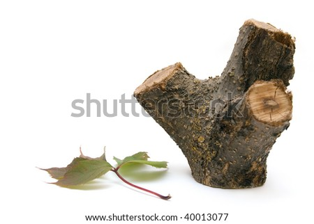 wooden stump and a leaf isolated on white