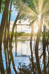 wooden swing in the Fermentelos lagoon, Aveiro, Portugal - sun rays entering through the vegetation