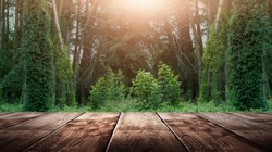 Wooden table in the woods, sleepy light. Empty wooden table top on nature background.