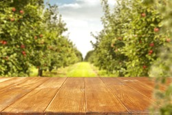 wooden table of space for your decoration and trees of apples