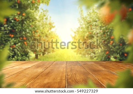 wooden table place of free space for your decoration and orange trees with fruits in sun light  #549227329