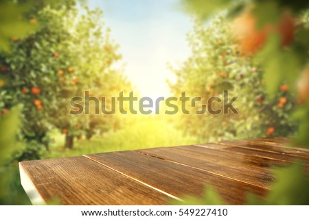 wooden table place of free space for your decoration and orange trees with fruits in sun light  #549227410