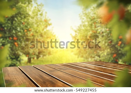 wooden table place of free space for your decoration and orange trees with fruits in sun light  #549227455