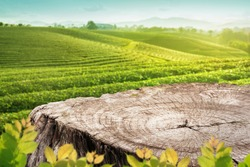 Wooden table top or stump with blurry tea plantation landscape againt blue sky and blured green leave frame Product Dispaly stand background concept