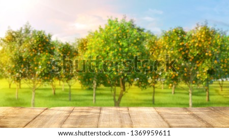 Wooden table top with free space for product and blurred orange garden trees with orange fruits in sun light. Oranges, orange juice, smoothie, yogurt product advertising key visual design elements. 3D