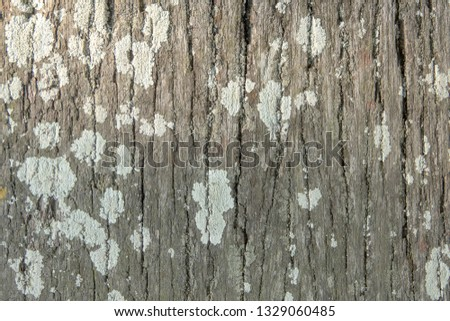 Wooden texture in high resolution #1329060485