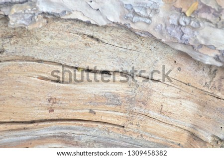 wooden texture of a big pine tree pulled down and cut into pieces with an electric hacksaw after being attacked by a thunderstorm